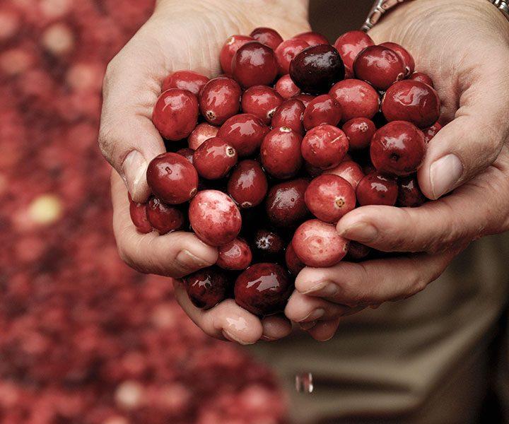 Cranberry Caper